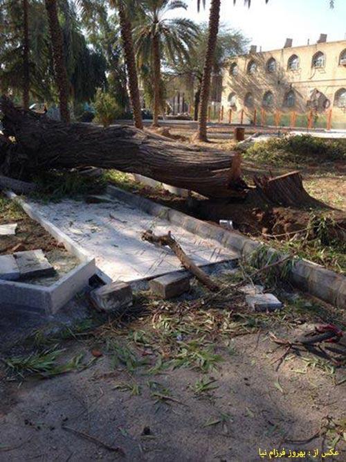 درخت قطع شده در پارک ملی برای احداث طرح جدید پارک 5 بهمن 92
