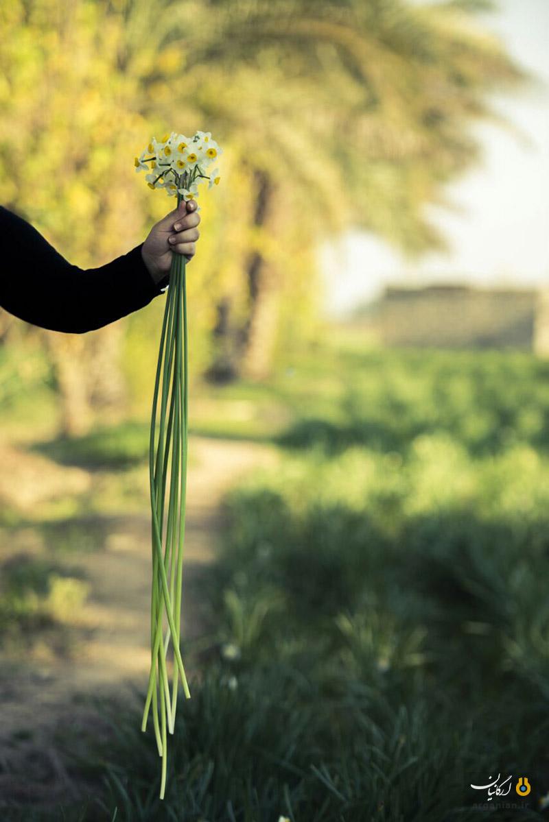 نرگس بهبهان / عکس از محمود ممتازان