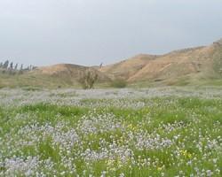 تپه ای ارگان